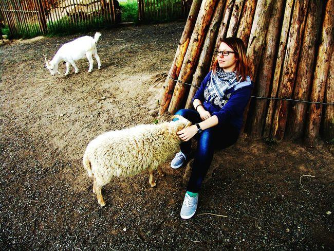 Darling & sheepy at Tierpark Sababurg