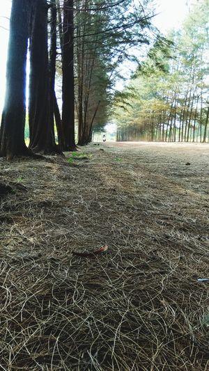 background n motorcycle Tree Tree Trunk Sky Woods Ground Leaves Fallen Fall