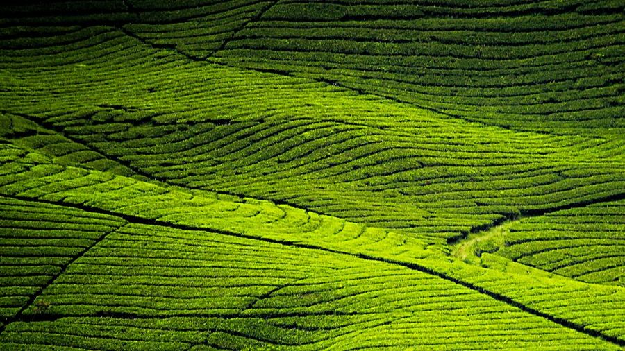 Permadani Cinta Bandung INDONESIA Geojabar Geonusantara Greenery Fields Bliss Landscape Nature Green Color Green Day Growth Leaf EyeEmNewHere Freshness Beauty In Nature No People Outdoors
