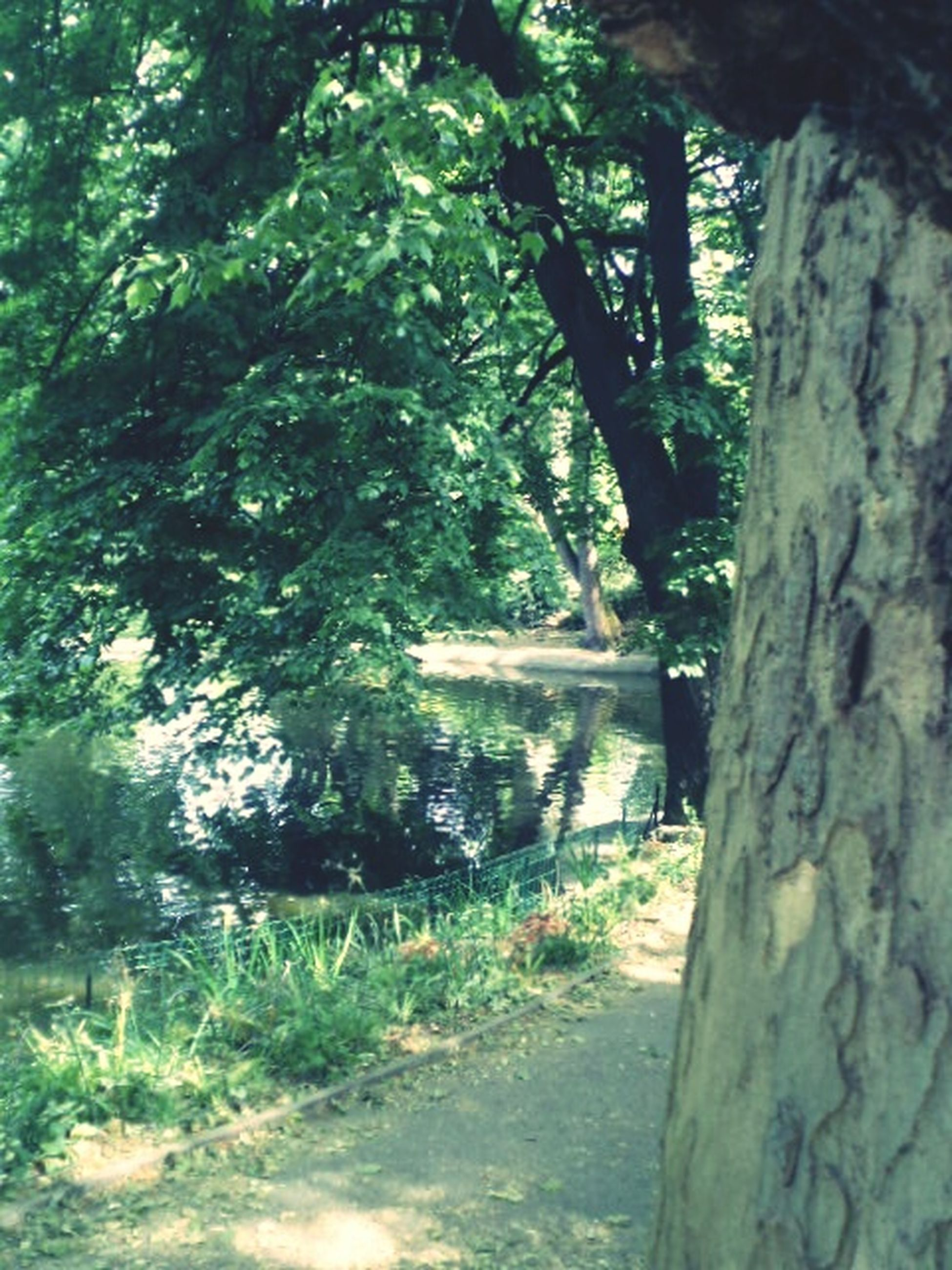 tree, growth, tranquility, tree trunk, nature, green color, forest, beauty in nature, tranquil scene, water, scenics, sunlight, plant, day, outdoors, no people, branch, idyllic, non-urban scene, green
