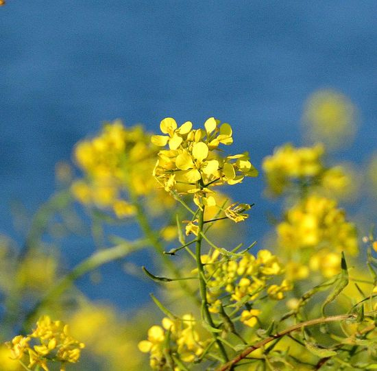 Israel Photography Izrael Vally Paint The Town Yellow Beauty In Nature Blooming Close-up Field Flower Growth Outdoors Plant Water Background Yellow