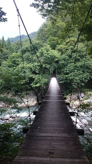 Japan Japan Photography No People Suspension Bridge Bridge - Man Made Structure Bridge Beauty In Nature Forest River Tree Water Sky Green Color Railway Bridge Woods