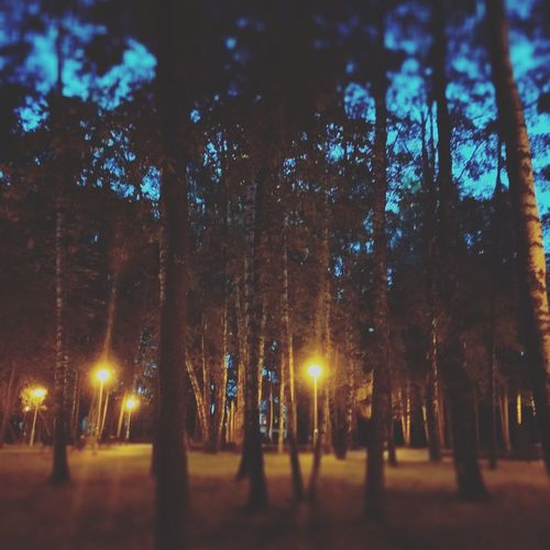Trees on illuminated street at night