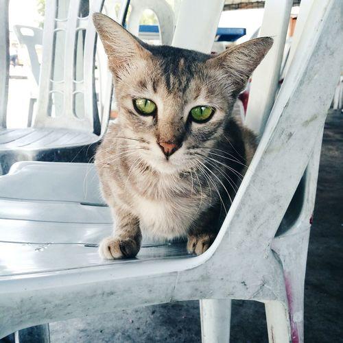 Cat PhonePhotography First Eyeem Photo