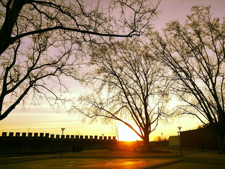 Sunset Tree Sunlight Sky Outdoors Sun No People Tranquility Nature Silhouette Beauty In Nature Day First Eyeem Photo