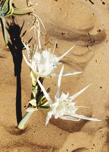 Sand flowers on the beach ❤️🇬🇷
