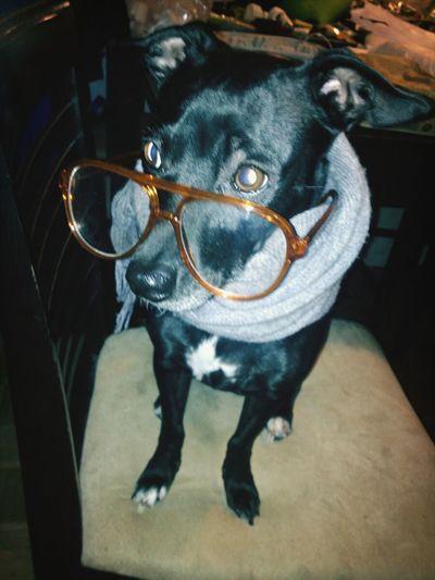 Stylish pup. Dog Puppy Enjoying Life Vintage