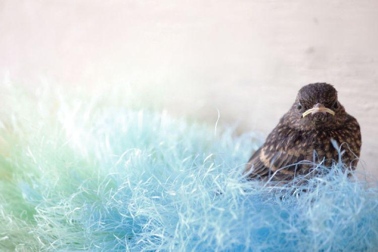 Bird perching on fabric