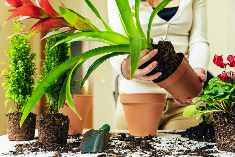 Plant Potted Plant Growth Nature Green Color Leaf Plant Part Freshness Food And Drink Women Indoors  Food Focus On Foreground Close-up Flower Pot Day Planting Midsection One Person Gardening Houseplant Home Interior Copy Space Flowerpot People Young Adult Lifestyle Seeds Bio Eco Earth