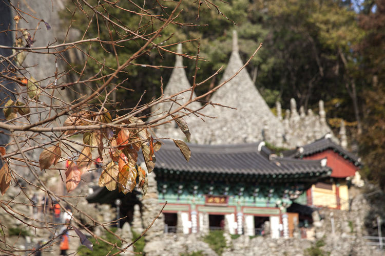 Tapsa, a Buddhism Temple in Maisan, Muan, Jeonbuk, South Korea Architecture Branch Buddhism Building Exterior Built Structure Day Focus On Foreground Maisan Nature No People Outdoors Roof Tapsa Temple Traditional Building Tree