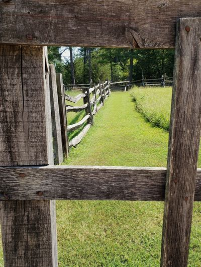Looking Through Selected For Premium Fences Fencepost Gate Pasture Fence Line Split Rail Fence 1800's Tree Field Grass Green Color Plant Farmland