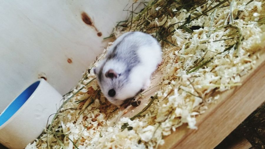 Hamster ♡ Love ♥ Fett Hamstertime Essen Happy Day☺ Mega Gut Gelaunt Weich Klein Baby