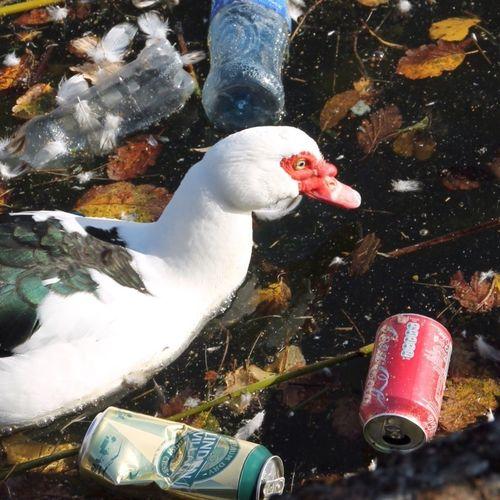 Pollution In My World Tadaa Community EyeEm Nature Lover