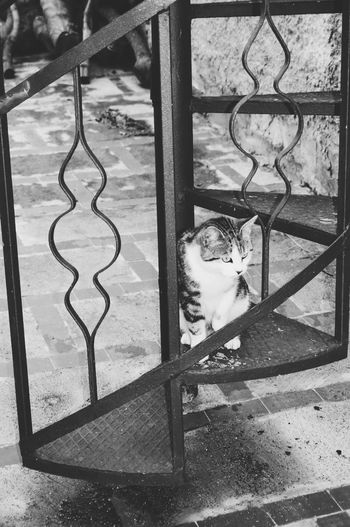 Taking Photos Blackandwhite Black And White Black & White Black&white Blackandwhite Photography Cat Catoftheday My Cat Cute Cats