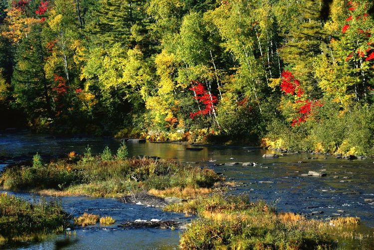 Red Splash Riverbank Riverscape Fall Colors Ablaze Trees Autumn Colors Beauty In Nature Autumn Water Fall Colors