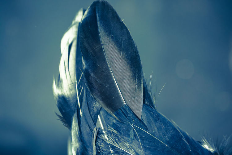Feather  Close-up No People Nature Feather  Metal Animal Themes Blue Animal Vertebrate Focus On Foreground Animals In The Wild Outdoors Sky Day Animal Wildlife One Animal Selective Focus Vulnerability  Shiny Lightweight Silver Colored Softness Steel