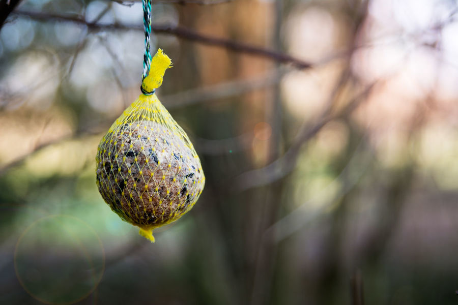 Animal Wildlife Birdseed Branch Day Focus On Foreground Food Hanging No People Outdoors