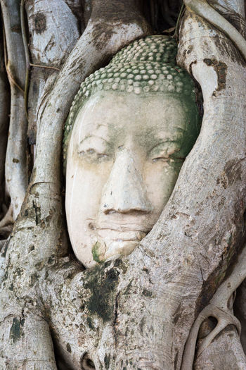 Head of sandstone Buddha in the tree roots. Wat Phra Mahathat, Ayutthaya, Thailand Ancient ASIA Ayutthaya | Thailand Buddha Buddhism Day Face Grey HEAD History Human Representation Landmark Mahathat Old Outdoors Religion Roots Sandstone Statue Stone Temple Thailand Travel Tree UNESCO World Heritage Site