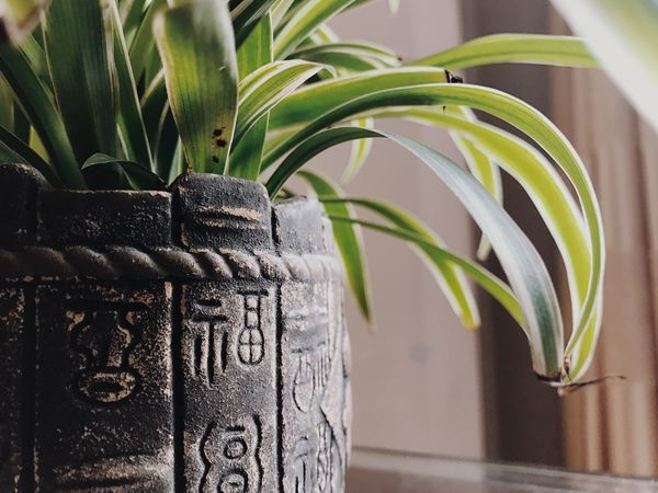 Plant Growth Indoors  Quiet Time Home 福 Chinese Words
