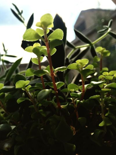 Showcase April Morning Room Plant Sun