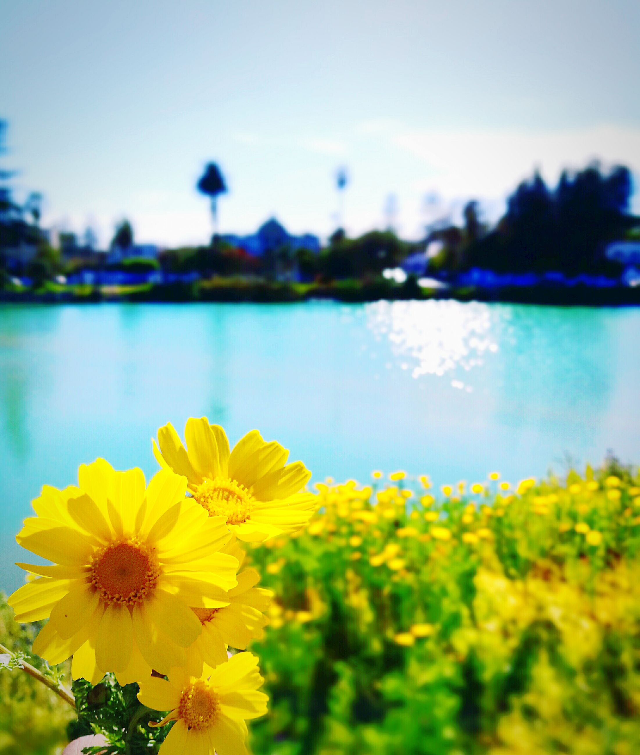 flower, beauty in nature, nature, fragility, freshness, yellow, petal, growth, focus on foreground, outdoors, sky, water, no people, flower head, plant, clear sky, day, blooming, building exterior, tree, close-up, architecture, city