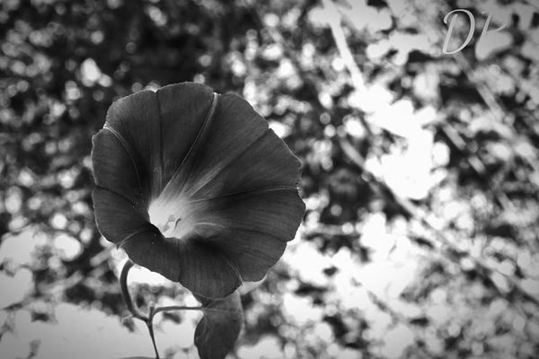 Black And White Friday Flower Nature Close-up Beauty In Nature Outdoors Petal Growth Focus On Foreground Plant Day No People Fragility Freshness Flower Head Tree EyeEmNewHere