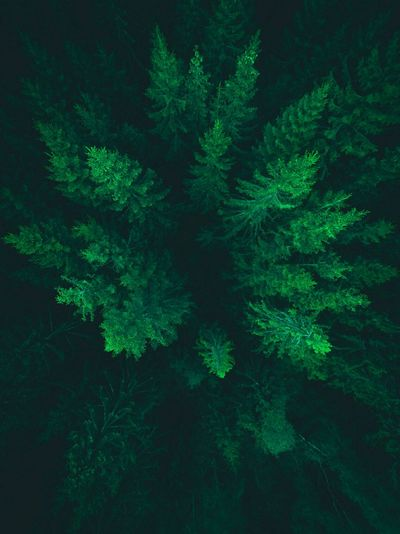 Come down to us. We will catch you. Fir Woods Forest Green Color Green Drone  Dronephotography Droneshot Drone Moments Drones Sweden Småland Växjö  Travel Color Of Life Colour Of Life A Bird's Eye View Flying High Perspectives On Nature
