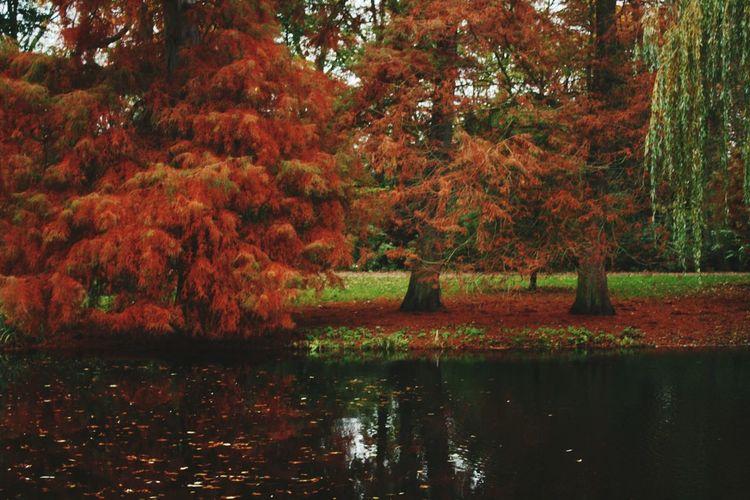 Wondelpark in red First Eyeem Photo