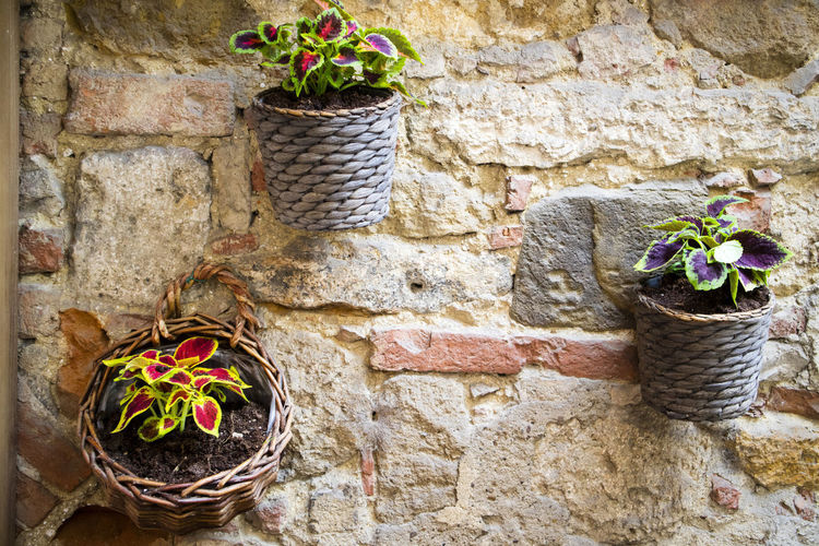 Plant Flower Wall - Building Feature Potted Plant Flowering Plant Wall Nature Stone Wall Day Basket No People Built Structure Architecture Container Solid Brick Wall Brick Outdoors Wicker Stone Material Flower Pot