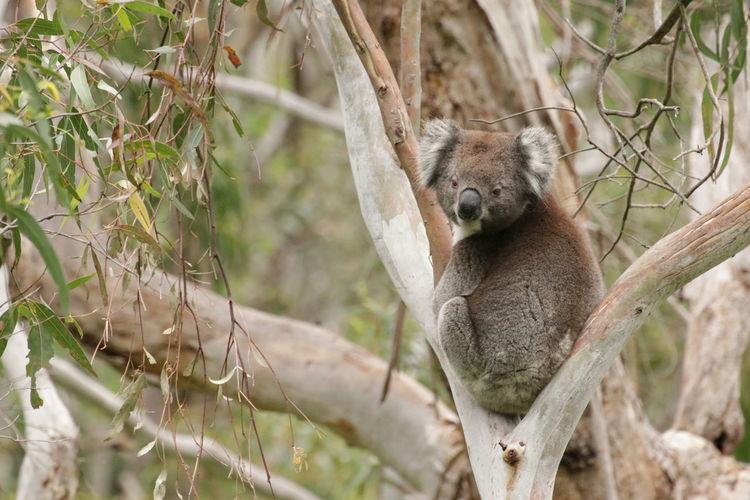 Portrait of squirrel sleeping on tree