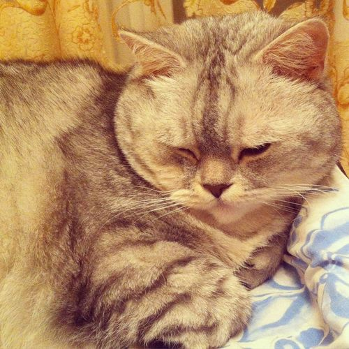Cute Cute Pets Cute Cats Cat Cat♡ Cat Lovers