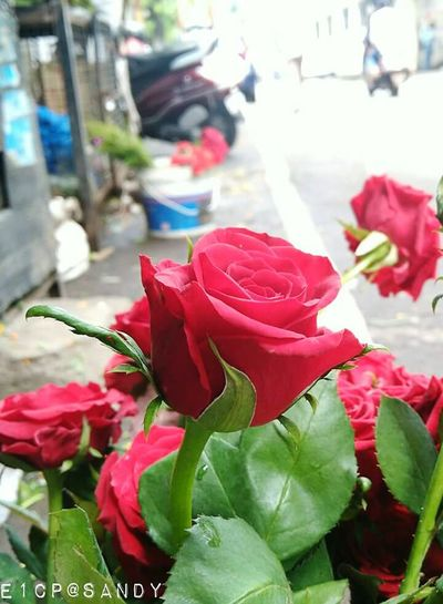 EyeEmNewHere Flower Red Freshness Fragility Nature Petal Beauty In Nature Roses🌹 Close-up