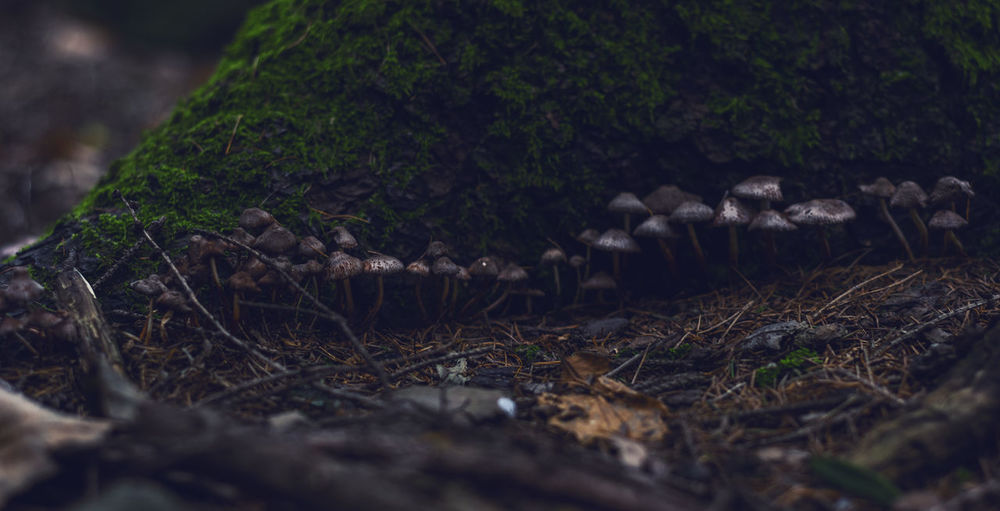 Mushrooms in the undergrowth in winter