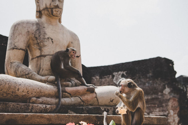 Monkeys sitting by statue against clear sky on sunny day
