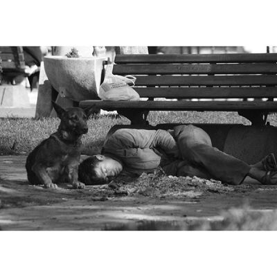 23 Nisan kareleri ?! Blackandwhite Black_and_white Ig_ikeda Ig_turkey ig_energy_people photo_natura photooftheday photo_turkey beniminsanlarım hayatakarken yaşamdankareler dog homeless people street