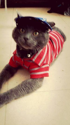 Newtone Ma mère adore habillé son bébé Gato Chat Félin  Poilu