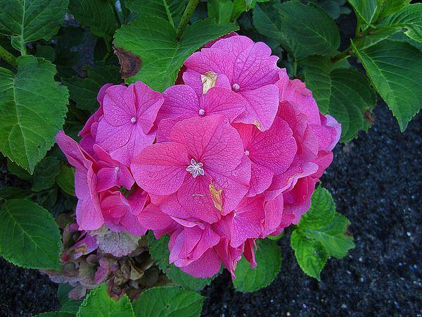 Flowerforfriends Floralperfection Pink Flower Beauty