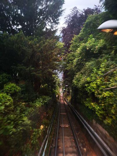 Cityscape Italy Brunate Trhees Funicolare Tree Water Railroad Track Rail Transportation Train - Vehicle Bridge - Man Made Structure Steam Train Public Transportation A New Beginning