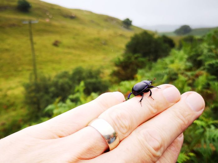 Human hand holding insect
