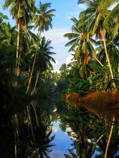 My Village Reflection River Reflection Coconut Tree Tree Water Lake Reflection Branch Sky Standing Water Leaf Vein Symmetry Leaf Water Lily Reflecting Pool Reflecting Pool Reflecting Pool Reflecting Pool Reflecting Pool Reflecting Pool Leaves Reflection Lake EyeEmNewHere