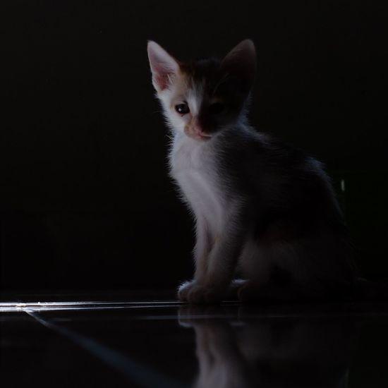Elena. Pets