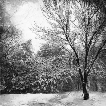 Rural Landscape Snow Fall Mood Landscape Nature Black And White Winter Snow Scene  Snow Nature's Beauty Tree And Sky Black & White