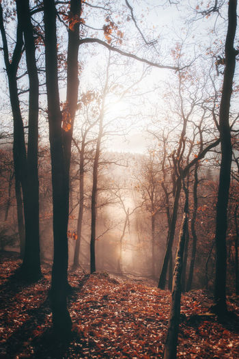 Tree Plant Forest Land Autumn Nature Beauty In Nature Tranquility Trunk Tree Trunk Change Fog Tranquil Scene Branch Scenics - Nature Outdoors Day No People Growth WoodLand Fall