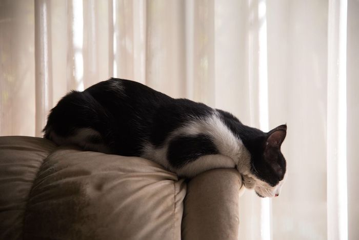 Peaceful. Pets Domestic Animals One Animal Animal Themes Mammal Domestic Cat Indoors  Curtain Feline Eyes Closed  Home Interior Relaxation Day Siamese Cat No People Close-up EyeEmNewHere