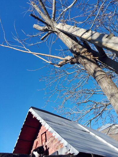 Cat WOLFZUACHiV Photography Wolfzuachiv Blue Sky Bare Tree Ladder Wooden Ladder Acacia Tree Tree Clear Sky Blue Sky Architecture Close-up Building Exterior Visual Creativity