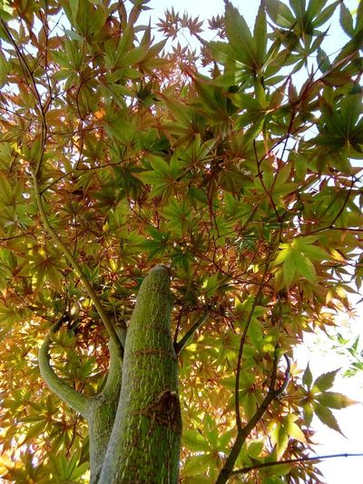 Low angle view of tree against plants