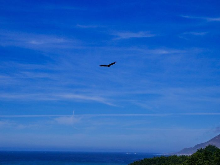 Flying Sky Animal Themes Animal Bird Vertebrate Blue Animal Wildlife Cloud - Sky Beauty In Nature Animals In The Wild One Animal Scenics - Nature Nature Low Angle View No People Water Tranquil Scene Silhouette