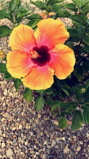 Flower Beauty In Nature Petal