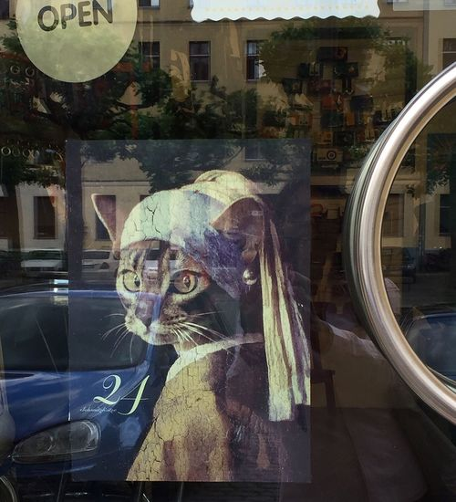 One Animal Animal Themes Domestic Cat Domestic Animals Reflection Pets Day No People Portrait Looking At Camera Outdoors Door Streetphotography Street Photography
