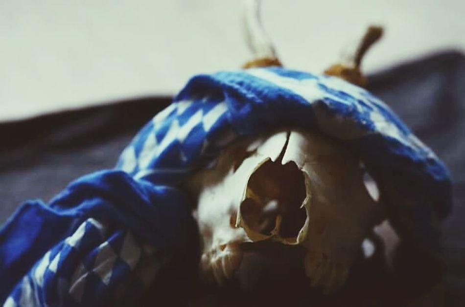 Skin and bones. Skull Bavaria Bandana Skulls And Bones